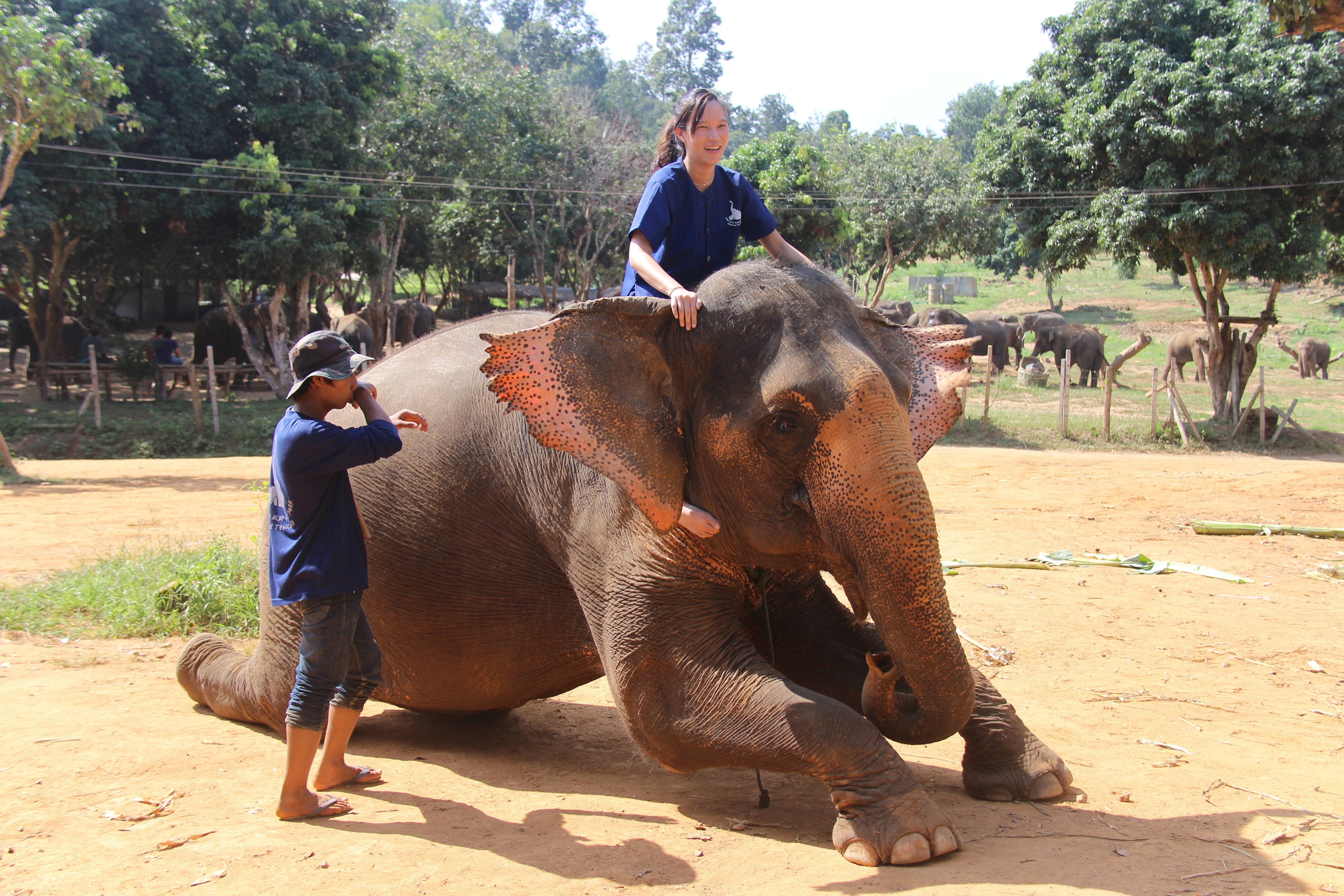 photo How to Ride an Elephant